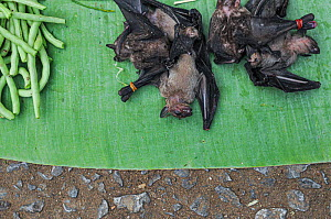 Dead bats and green beans for sale on market stall, Luang Prabang, Laos.  -  Jo-Anne McArthur / We Animals