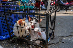 Two caged cats for sale at Hanoi Market, Vietnam. - Jo-Anne McArthur / We Animals