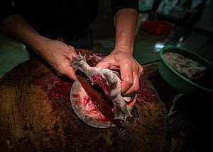 Worker cutting shell off a live turtle at a wet market in Taiwan. - Jo-Anne McArthur / We Animals