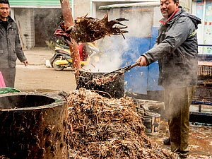 Worker throwing chicken in wet market, Anhui, China.  -  Jo-Anne McArthur / We Animals