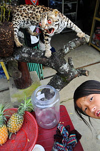 Young girl with a stuffed leopard cat (Prionailurus bengalensis) at Bac Ha Market, Vietnam. - Jo-Anne McArthur / We Animals