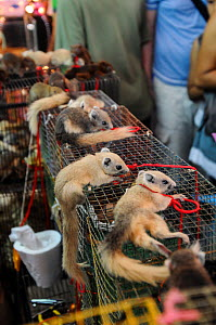 Small mammals (rodents) tied to cages with string at the Chatuchak Market, Thailand.  -  Jo-Anne McArthur / We Animals
