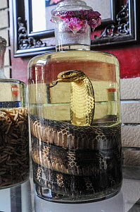Snake wine at Hanoi market, Vietnam. The wine is believed to have curative properties and is used in Traditional Chinese Medicine. - Jo-Anne McArthur / We Animals