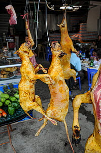 Roasted dog meat for sale, hanging from hooks. Vietnam.  -  Jo-Anne McArthur / We Animals