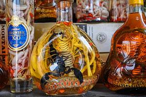 Snake and scorpion wine at Hanoi Market, Vietnam. The wine is believed to have curative properties and is used in Traditional Chinese Medicine.  -  Jo-Anne McArthur / We Animals