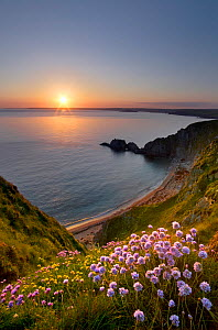 Thrift (Armeria maritima) in foreground looking over Hope Cove at sunset, Bigbury Bay, Devon, England, UK. November 2016.  -  Guy Edwardes