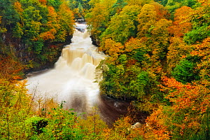 Autumn colour around the Falls of Clyde, Lanarkshire, Scotland, UK, October 2006.  -  Guy Edwardes