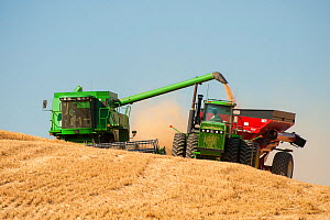 Combine harvesting wheat and unloading into hopper while both vehicles are moving, Washington, USA, August  -  John Shaw
