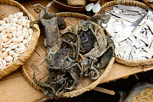 Dried chameleons for sale at Dantopka Great Market, Cotonou, Benin, West Africa. The chameleons are used for voodoo ceremonies.  -  Enrique Lopez-Tapia