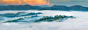RF - Mist hanging over Lowland Dipterocarp Rainforest just after sunrise. Danum Valley Conservation Area, Sabah, Borneo. (This image may be licensed either as rights managed or royalty free.)  -  Nick Garbutt