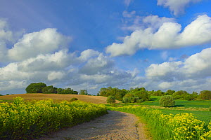 Countryside farmland landscape in Hinterland, Ruegen, Germany, May.  -  Sandra Bartocha