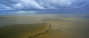 Low tide, St. Peter Ording, Schleswig-Holstein Wadden Sea National Park, Germany, September.  -  Sandra Bartocha