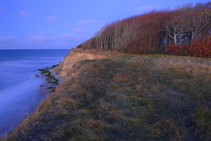 Baltic Sea coast and coastal forest of European Beech (Fagus sylvatica), Ruegen, Germany, January.  -  Sandra Bartocha
