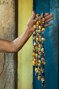 Illegal sale of jewelry made with Cuban tree snail (Polymita picta) shells near Yumury, Cuba  -  Bruno D'Amicis