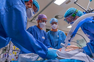 ICU team of a doctor an ICU nurses turning a patient on his stomach while on the ventilator Jeroen Bosch Ziekenhuis, Den Bosch, The Netherlands April 2020. EDITORIAL USE ONLY.  -  David Pattyn