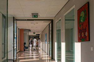 Doctors in training in an empty corridor on the ICU. No visits are allowed at this time of the Corona pandenmic  Jeroen Bosch Ziekenhuis, Den Bosch, The Netherlands April 2020. EDITORIAL USE ONLY.  -  David Pattyn