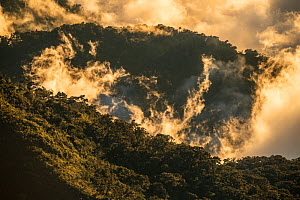 Cloud forest mixes with the clouds, Talamanca mountain range, Costa Rica.  -  Nick Hawkins