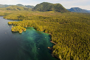 Aerial view of coastline, Great Bear Rainforest covered in Pacific herring (Clupea pallasii) spawn, Bella Bella, British Columbia, Canada. March.  -  Nick Hawkins
