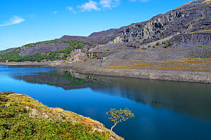 Dinorwic disused slate quarry viewed across Llyn Peris Reservoir, Llanberis, North Wales, UK September 2019.  -  Alan Williams
