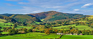Moel Famau in the Clwydian Mountain Range viewed from Loggerheads Country Park in autumn near Mold, North Wales, UK, October.  -  Alan Williams
