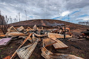 Burnt cabin destroyed by bushfires on the edge of a private pine plantation. . This area was burnt during the 2019/20 Australian bushfires. Goongerah, Victoria, Australia. February 2020?. Property rel...  -  Doug Gimesy