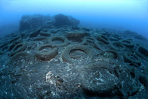 Marine pollution - discarded vehicle tyres in the sea, Canary Islands. Atlantic Ocean.  -  Sergio Hanquet