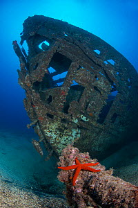 Meridian wreck, ship intentionally sunk in 2005. with Red starfish (Echinaster sepositus) Tenerife, Canary Islands.  -  Sergio Hanquet