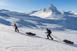 Orsolya Haarberg and Erlend Haarberg pulling sledges in the Jotunheimen mountains, with the Mt Store Smorstabbtinden in the background. Norway. April 2020.  -  Orsolya Haarberg