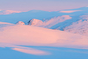 Snow-covered Reinheimen National Park. In the middle of the picture, flock of wild Reindeer (Rangifer tarandus) resting on the snow. Vaga, Norway. March 2020.  -  Orsolya Haarberg