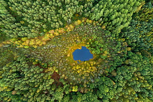 Aerial view of dystrophic forest lake surrounded by peatbog. East Pomerania, Baltic region of Poland. Brodnica forest. September 2019. Highly commended in the Landscapes, Waterscapes and Flora Categor...  -  Milan Radisics