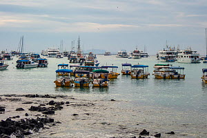 Dozens of tour boats lay idle in port,during Covid-19 lockdown, Puerto Ayora, Santa Cruz Island, Galapagos Islands April 2020  -  Tui De Roy