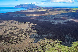 Rugged shores of Banks Bay, where whalers two centuries ago inadvertently let some Florenana and Pinta tortoises escape, which later bred with the local species. Wolf Volcano, Isabela Island, Galapago...  -  Tui De Roy