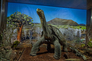 Embalmed remains of the last Pinta saddleback tortoise (Geochelone abingdonensis) named 'Lonesome George'. With backdrop photo of Pinta Island donated to the public exhibit by Tui De Roy, Fuas...  -  Tui De Roy