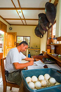 Conservationist making notes,with tray of Galapagos tortoise eggs. Fausto Llerena Tortoise Breeding Centre run by the Galapagos National Park Directorate, Santa Cruz Island, Galapagos.  -  Tui De Roy