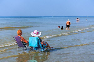 Two elderly ladies sunbathing in chairs on the beach just in the sea, and couple with dog paddling in water along the North Sea coast during heat wave, Belgium, July 2019  -  Philippe Clement