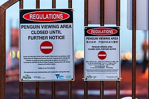 Signs explaining that the St Kilda Penguin colony is closed for viewing until further notice due to the Coronavirus (COVID-19) pandemic. St Kilda pier, St Kilda, Victoria, Australia. April 2020  -  Doug Gimesy