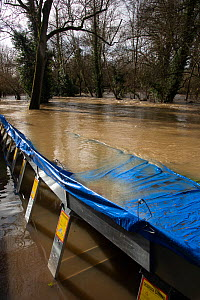 Flooding and Flood Defences, Leatherhead, Surrey, UK. Following Storm Daniel 16th February 2020  -  Adrian Davies