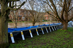 Flooding and Flood Defences, Leatherhead, Surrey, UK. Following Storm Daniel 16 February 2020  -  Adrian Davies