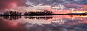 Leafless Cottonwood trees (Populus sp.) and cattails reflected in the water at sunset, Whitewater Draw, Arizona State Game and Fish Reserve, USA. January 2020.  -  Jack Dykinga