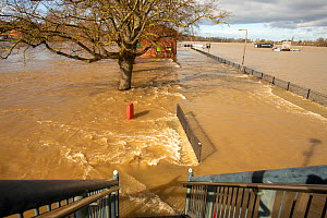 Fast-flowing floodwater from Worcester Racecourse as viewed from Sabrina Bridge, River Severn, England, UK. February 2020.  -  Will Watson