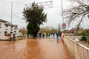 People at the edge of Tenbury Wells Bridge during Storm Dennis floods, Tenbury Wells, Worcestershire, England, UK. February 2020.  -  Will Watson