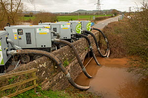 Environment Agency pumping floodwater from the River Lugg, Mordiford to protect the medieval bridge during the floods caused by Storm Dennis, Herefordshire, England, UK. February 2020.  -  Will Watson