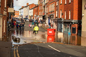 Flooding of St. Martin's Street, after Storm Dennis marking the highest ever recorded level of flooding, Hereford, UK. February 2020.  -  Will Watson