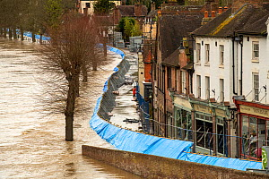Environment Agency flood barrier along Wharfage, River Severn, Ironbridge, Shropshire, England, UK. February 2020.  -  Will Watson