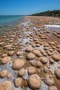 Lake Clifton Thrombolites, Yalgorup National Park, Western Australia. December 2015  -  Jiri Lochman