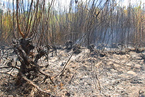 Burning Peat Swamp - an area accidentally burnt in a prescribed burn program. Peat swamps burn extremely slowly over several months after the bushfire in surrounding areas has been extinguished. As th...  -  Jiri Lochman