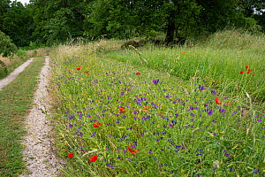 View down drive lined with wildflowers to photographer's house, Podere Montecucco, Umbria, Italy, June 2020.  -  Paul  Harcourt Davies