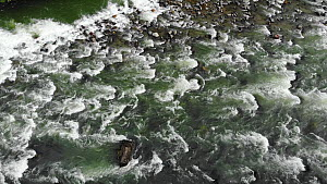 Aerial drone shot of rapids on the Rio Quijos, a tributary of the Amazon, Ecuador, 2020.  -  Morley Read