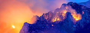 Lightning caused wildfire on Mount Lemmon, Coronado National Forest, Arizona, USA, 11th June 2020.  -  Jack Dykinga