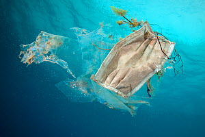Face mask, used as PPE during Covid-19, improperly disposed of in the sea, Tenerife, Canary Islands  -  Sergio Hanquet